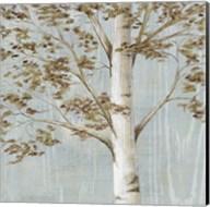 Birch Study I Fine-Art Print