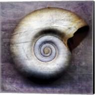 Moon Snail Fine-Art Print