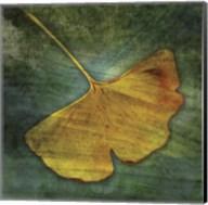 Gingko 3 Fine-Art Print