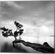 Water Tree Fine-Art Print