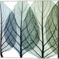 Celosia Leaves I Fine-Art Print