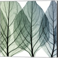 Celosia Leaves II Fine-Art Print