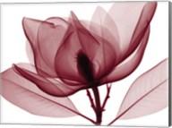 Red Magnolia I (oversize) Fine-Art Print