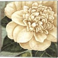 Camellia Study I Fine-Art Print