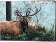 Elk Foraging Fine-Art Print