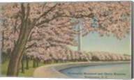 Wash. Monument & Cherry Blossoms Fine-Art Print
