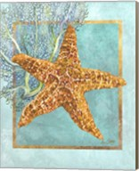 Starfish and Coral Fine-Art Print