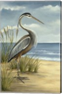 Shore Bird I Fine-Art Print