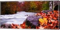 Autumn Flow Fine-Art Print