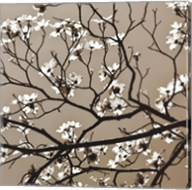 Dogwood Square I Fine-Art Print