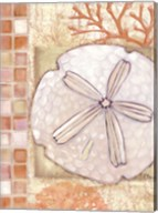 Mosaic Shell Collage IV - mini Fine-Art Print