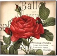 Scent of a Rose I Fine-Art Print