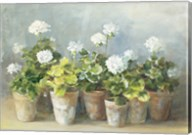 White Geraniums Fine-Art Print