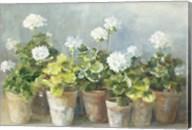 White Geraniums Fine-Art Print