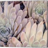 Succulents I Fine-Art Print