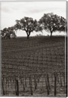 Paso Robles Toned Fine-Art Print