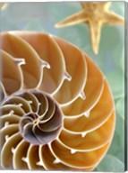 Seaglass 2 Fine-Art Print