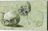 Study of Three Skulls Fine-Art Print