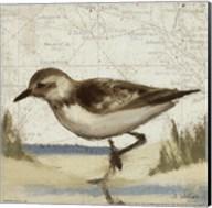 Beach Bird IV Fine-Art Print