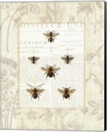 Bee Botanical Fine-Art Print
