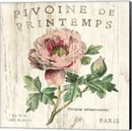 Pivoine de Printemps Fine-Art Print