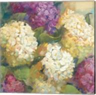 Hydrangea Delight II Fine-Art Print