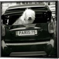 Paris Dog I Fine-Art Print