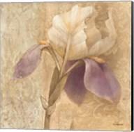 Brocade Iris Fine-Art Print