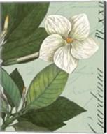 Botanique Bleu III Fine-Art Print