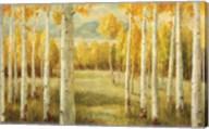 Aspens Fine-Art Print