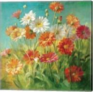 Painted Daisies Fine-Art Print
