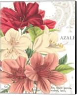 Azalee Jardin II Fine-Art Print