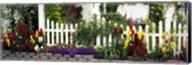 Flowers and picket fence in a garden, La Jolla, San Diego, California, USA Fine-Art Print
