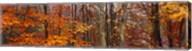 Autumn trees in Great Smoky Mountains National Park, North Carolina, USA Fine-Art Print