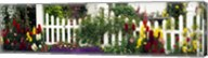 Flowers and picket fence in a garden, La Jolla, San Diego, California, USA Fine-Art Print