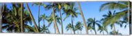 Low angle view of palm trees, Oahu, Hawaii, USA Fine-Art Print