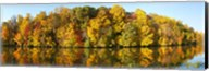 Reflection of trees in a lake, Strawbridge Lake, Moorestown, New Jersey, USA Fine-Art Print