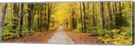 Trees along a pathway in autumn, Hiawatha National Forest, Alger County, Upper Peninsula, Michigan, USA Fine-Art Print