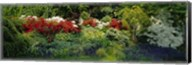 High Angle View Of Flowers In A Garden, Baltimore, Maryland, USA Fine-Art Print