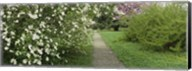 Path In A Park, Richmond, Virginia, USA Fine-Art Print