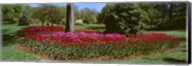 Azalea and Tulip Flowers in a park, Sherwood Gardens, Baltimore, Maryland, USA Fine-Art Print