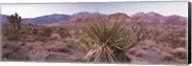 Yucca plant in a desert, Red Rock Canyon, Las Vegas, Nevada, USA Fine-Art Print