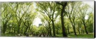 Central Park in the spring time, New York City Fine-Art Print