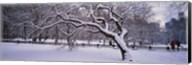 Trees covered with snow in a park, Central Park, New York City, New York state, USA Fine-Art Print