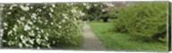 Path In A Park, Richmond, Virginia, USA Fine-Art Print