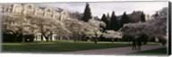 University of Washington, Seattle, King County, Washington State Fine-Art Print