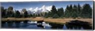 Moose & Beaver Pond Grand Teton National Park WY USA Fine-Art Print