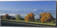 Switzerland, Reusstal, Panoramic view of Pear trees in the Swiss Midlands Fine-Art Print