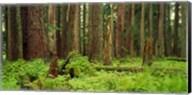 Forest floor Olympic National Park WA USA Fine-Art Print