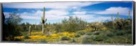Poppies and cactus on a landscape, Organ Pipe Cactus National Monument, Arizona, USA Fine-Art Print